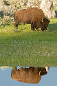 MAM 26 WF0011 01