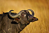 MAM 26 WF0012 01
