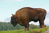 MAM 26 WF0015 01