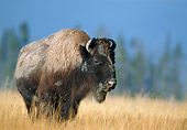 MAM 26 WF0018 01