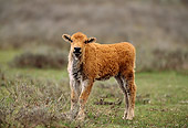 MAM 26 DB0001 01