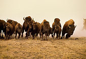 MAM 26 RW0001 01