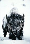 MAM 26 TL0001 01