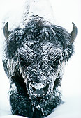 MAM 26 TL0003 01