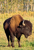 MAM 26 TL0004 01