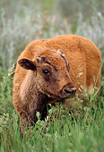 MAM 26 TL0005 01