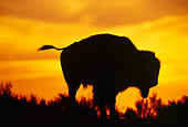 MAM 26 TL0007 01