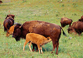 MAM 26 TL0008 01