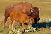 MAM 26 TL0009 01