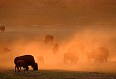 MAM 26 TL0012 01
