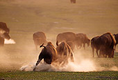 MAM 26 TL0013 01