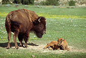 MAM 26 TL0016 01