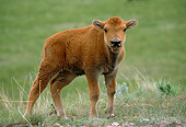 MAM 26 TL0017 01