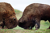 MAM 26 TL0018 01