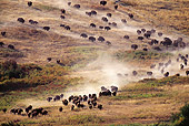 MAM 26 TL0023 01