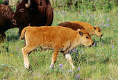MAM 26 TL0024 01