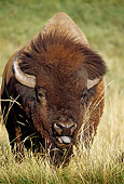 MAM 26 TL0026 01