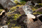 MAM 27 MC0001 01