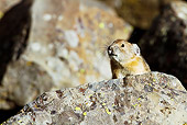 MAM 27 MC0002 01