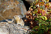 MAM 27 MC0005 01