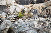 MAM 27 MC0006 01