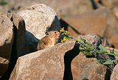 MAM 27 TL0004 01