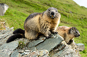 MAM 29 AC0010 01