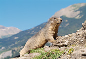 MAM 29 GL0002 01