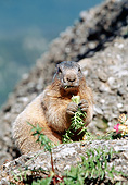 MAM 29 GL0004 01