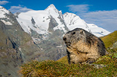 MAM 29 KH0003 01