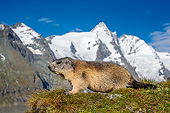 MAM 29 KH0006 01