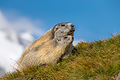 MAM 29 KH0014 01