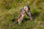 MAM 29 KH0022 01