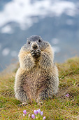 MAM 29 KH0024 01