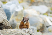MAM 29 SK0001 01