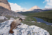 MAM 29 TL0001 01