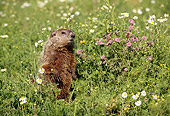 MAM 29 TL0004 01