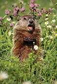 MAM 29 TL0005 01