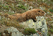 MAM 29 TL0006 01