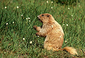 MAM 29 TL0007 01