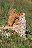 MAM 29 TL0008 01