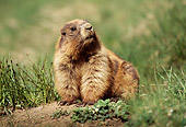 MAM 29 TL0009 01