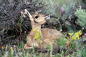 MAM 33 BA0001 01