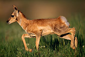MAM 33 TL0004 01