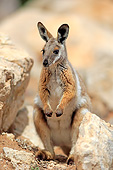 MAM 35 AC0007 01