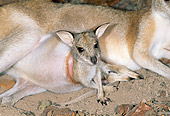 MAM 35 MH0002 01