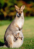 MAM 35 MH0003 01