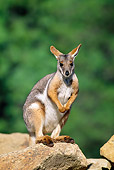 MAM 35 MH0005 01