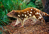 MAM 36 KH0001 01