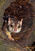 MAM 36 KH0002 01